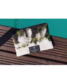 Pochette motif Tea Tree